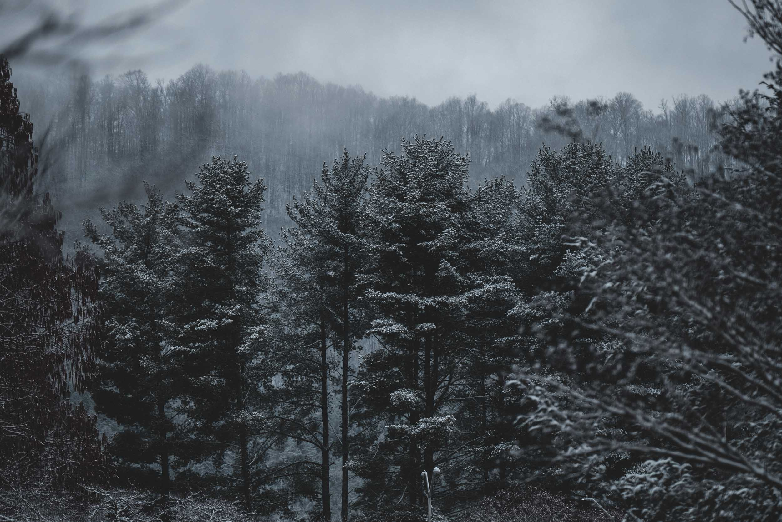 Trees in the snow.