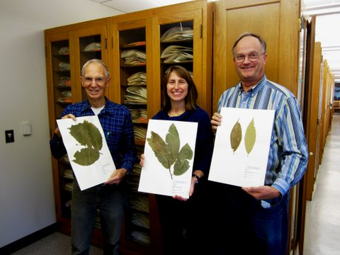 Dr. Kathy Mathews & others with chestnut specimens